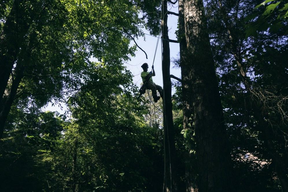 cuttin down a tree